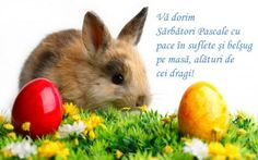 This rabbit may know a thing or two about Easter baskets, but nobunny knows dental plans like we do! Easter Sunday Images, Easter Bunny Pictures, Ostern Wallpaper, Happy Easter Quotes, Rabbit Wallpaper, Easter 2014, Easter Religious, Gb Bilder, Easter Wishes