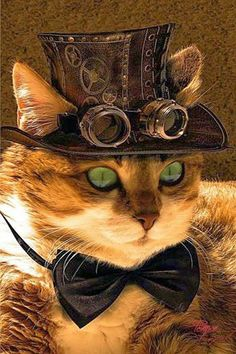 Happy Caturday  ~ Steam punk tendencies facebook