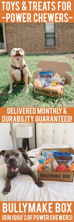 Is your dog a POWER CHEWER? Get DURABLE toys and DELICIOUS treats delivered monthly! All toys guaranteed 14 days or we replace them for free. See here: https://bullymake.com/?utm_source=pinterest&utm_medium=pinterest-ads&utm_term=pb-jan10&utm_content=pb-jan10
