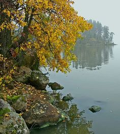 Autumn has fallen, Finland Eye For Beauty, Natural Beauty, Nature Images, Nature Pictures, Forest Painting, Scandinavian Countries, Archipelago, Bushcraft, Beautiful Landscapes