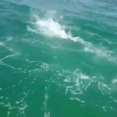 Check out this Tarpon jumping on the boat trying to get away from the Hammerhead! 🐋 😆 NSFW language 😶✅ He ultimately was eaten by the Shark though shortly after falling back in.  Note: The Tarpon was not hooked up while being chased  Video by @robertgorta Reposted by @hurricaneboatanchors #bassfishing  #fisheries  #fishingshop  #fishingtackleshop  #fishinghook  #lure  #reel  #fishingstore  #go fishing  #walleyefishing  #huntingandfishing  #bait  #tackle  #angler  #saltwater…