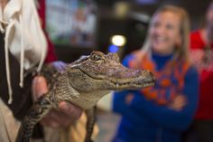 Captain Morgan Shows Off Live Gator For Florida Football Fans