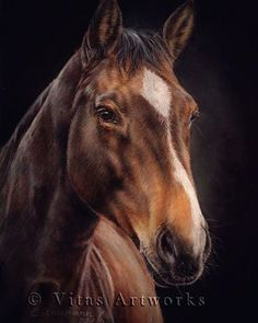 [FINISHED]   Horse in Pastells   Pferd in Pastell  #horseart #horse #horsedrawing #horsesofinstagram #animalart #equineart #hannoverian #pferdeschoenheiten #animaldrawing #petdrawing #petportrait #realisticart #realisticdrawing #artofdrawingg #artist_4_feature #animalcreatives #youngartist #germanart #young_artists_help #horselove #art_4share #sharingart #supportartist #instaartexplorer #pasteldrawing #pastellove #hannoveraner #art_spotlight #artscloud #loveart