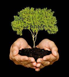 """En The New Green Group están seguros de que la mayoría de las personas y las empresas desean contribuir con la protección del ambiente, pero no tienen idea de cómo hacerlo, por esto, NGG realiza la investigación y las acciones necesarias para que las empresas y los individuos sean """"parte de la solución"""" a los problemas ambientales.  En el Casino Del Río, por ejemplo, además de plantar árboles, lograron rediseñar su estructura para que sus emisiones contaminantes disminuyeran."""