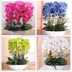 100 SZTUK orchidea-nasiona nasiona KWIATÓW dla domu garden nasiona storczyków Phalaenopsis kupić-bezpośrednie-od china orquidea semente