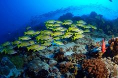 Bocas del Toro El archipiélago cautiva al visitante por su insuperable vegetación compuesta de bosques húmedos, selva, manglares y pantanos. Su biodiversidad lo convierte en un lugar único y privilegiado para la observación de la fauna y flora.