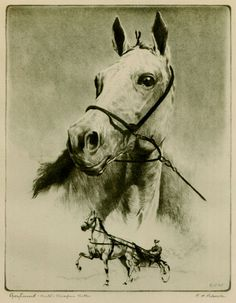 """Black & white classic head study of the famous """"Trotter of the century"""", winner of the 1935 Hambletonian, set a World's Record for Three year old Trotting gelding. When hitched as a pair with Hambetonian winner Rosalind (subject of a beloved Marguerite Henry book, Born To Trot) they set a speed record lasting over 33 years. Horse Harness, Harness Racing, Standardbred Horse, Horse Racing, Race Horses, Horse Anatomy, American Saddlebred, Equine Art, Horse Art"""