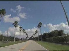 Wellington Village Manager Paul Schofield gave the go-ahead for thirty-five trees along Aero Club Drive to be cut down on Monday. However, the plan is to remove six-hundred palm trees in the area over the next three years. Florida Palm Trees, Palm Beach County, Golf Courses, Club