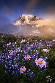 mountain with wildflowers