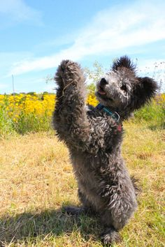 Funny Dog Photos, Dog Pictures, Funny Dogs, Cute Dogs, Coyotes, Cat Paws, Dog Cat, Pumi Dog, If Dogs Could Talk
