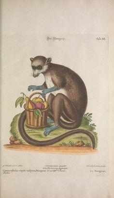 1768 | Volumes 6-7 | Recueil de divers oiseaux étrangers et peu communs By Georg Leonhart Huth,
