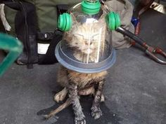 New Orleans Fire Department Uses Oxygen Mask to Save Kitten.  After being pulled lifeless from a kitchen fire, a kitten was revived by firefighters.