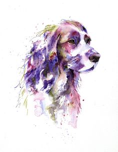Working cocker spaniel in watercolour by artist Jane Davies. Available as an LIMITED EDITION PRINT.