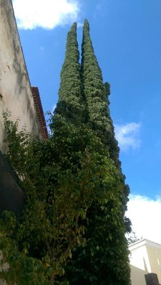 Trees Madeira
