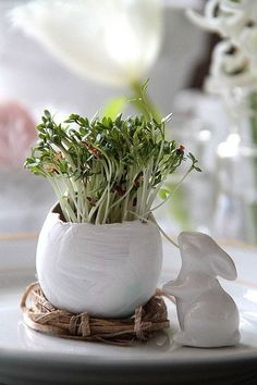 Alfalfa Sprouts for Easter Table - ingenious! Spring Nature, Spring Home, Spring Green, Spring Colors, Bunny Nursery, Easter Parade, Hoppy Easter, Colorful Garden, Easter Table