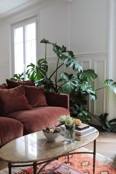 Lappartement parisien chic dune Canadienne : salon vintage tropical - Elegant living room in an apartment in Paris // He Room, Tropical Living Room, Elegant Living Room, Apartment Decor, Elegant Living, Vintage Apartment, Stylish Interiors, French Apartment, Urban Jungle Living Room
