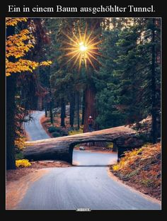 Nature in all its beauty. Sequoia National Park, National Parks, Beautiful Places To Visit, Beautiful World, Best Places To Travel, Places To See, Tumblr Travel, Destinations, Le Shop