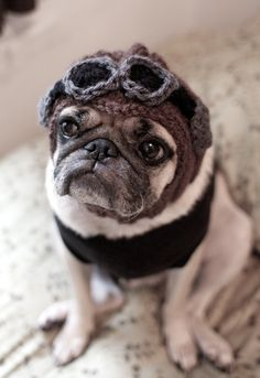 magical girl pug - Google Search