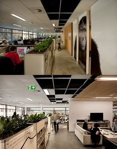 Best cubicles coordinated with gorilla painting! #cubicles