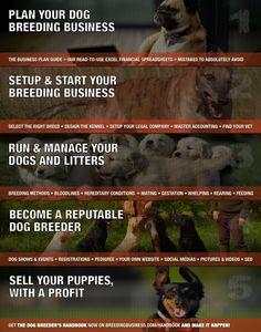 How To Start Breeding Dogs For Money