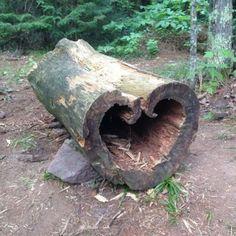 Heart Tree Copper Falls State Park Wisconsin via Kayla Vermack I Love Heart, With All My Heart, Happy Heart, Heart In Nature, Heart Tree, Heart Images, Heart Pics, Jolie Photo, Felt Hearts