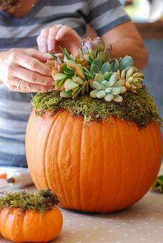 Pumpkin Succulent Decor