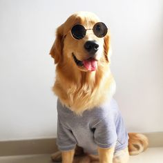 Fashion Dog Glasses Eyewear Sunglasses For Cats Small Large Dogs Funny Photos Props New Year Party Dress Up Pet Cat Accessories Small Sized Dogs, Large Dogs, Funny Dog Photos, Funny Dogs, Dressed Up Dogs, Dog With Glasses, Golden Retriever, Cat Accessories, Dog Dresses