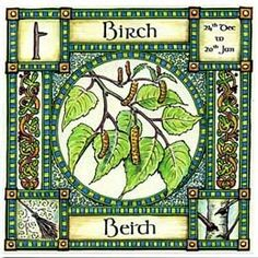 """Neo-Druidism - Birch, Ogham name Beith, rules 24th Dec to 20th Jan, in divination it represents a new start, beginnings and birth. Use Birch twigs for broom making """"a new broom sweeps clean""""."""