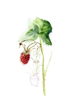 RaspBerry Next tattoo is a raspberry