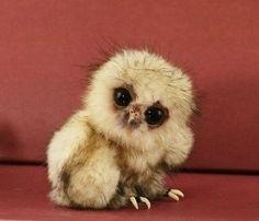 二頭身のフクロウの赤ちゃん、つぶらな瞳が可愛すぎる><