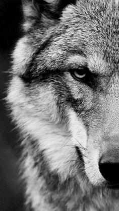 Animal / Wolf Mobile Wallpaper – Animal / Wolf Mobile Wallpaper – Source by. Iphone Wallpaper Wolf, Bike Wallpaper, Movies Wallpaper, Cats Wallpaper, Wild Animal Wallpaper, Nature Wallpaper, Iphone Wallpapers, Pattern Wallpaper, Wallpaper Quotes