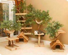 Cómo adaptar tu casa al estilo de vida de tu gato