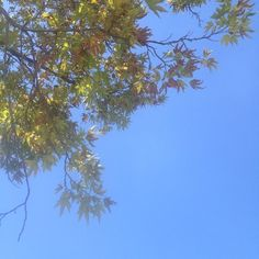 Friday afternoon. #sky #trees  #nature