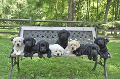 A litter of future service dogs pose for a group photo before heading to their puppy raisers.