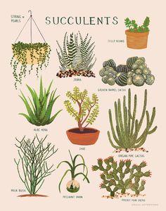 Succulents-Print-1000px