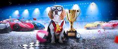 #Rizk #Casino Race ist nun noch schneller und besser! Es gibt täglich viele #Preise zu #gewinnen!