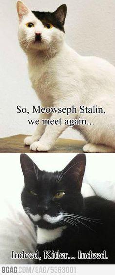 Meowseph Stalin and Adolf Kitler For Kyle.