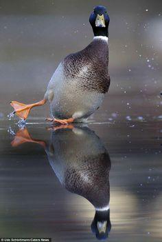 Ooops! Si scivola! #animali #fotografie