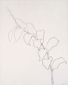 ellsworth kelly plant drawings - Google Search