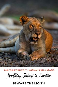 You don't really want to see lions on African walking safaris. Being out in the bush is thrilling enough! The best walking safaris in Africa are in Zambia. Egypt Travel, Africa Travel, Ethiopia Travel, Namibia, To Go, Morocco Travel, African Countries, African Safari, What Is Like