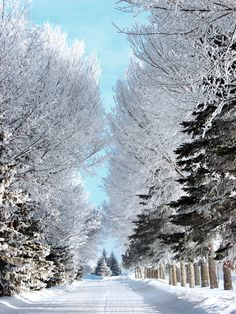 hoar frost pathby ~Handie I love snow and this totally makes me live it even more. Winter Magic, Winter Snow, Winter White, Winter Pictures, Nature Pictures, Beautiful World, Beautiful Places, Winter Schnee, Snowy Day