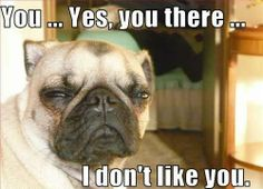 LOL #dogs #puppies #funny