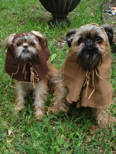 60 really funny Halloween pet costumes. I don't see why animals can't partake in the fun also, right?