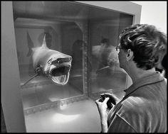 shark & bill gates