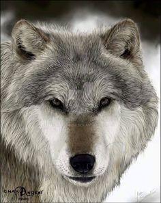 Wolf Eyes, Wolf Face, Wolf Spirit, Spirit Animal, Beautiful Wolves, Animals Beautiful, Wolf Pictures, Animal Pictures, Animals And Pets