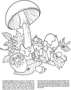 cartoon mushroom coloring pages  Flip Under The Mushroom In The