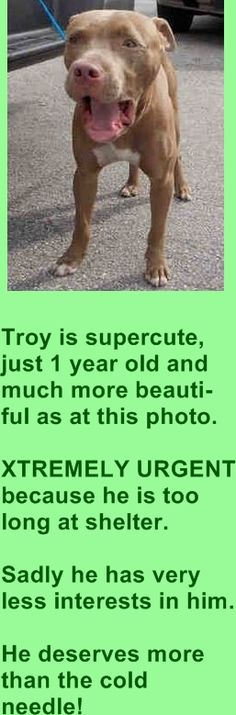 TOTAL DESPERATION ‼ That is what TROY feels now‼ This dog has been here since Dez 31st and cannot stand this place anymore‼ He is SUPER URGENT ⌛ TROY's ID ‪#‎A1669978‬ He is only a year old - Pit Bull Mix He came in Dez 31st and is way past due his stray hold that ended on Jan 07, https://www.facebook.com/urgentdogsofmiami/photos/pb.191859757515102.-2207520000.1420063399./900384413329296/?type=3&theater