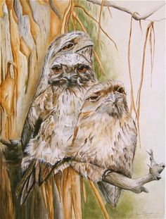Wildlife Art. The wonderful Tawny Frogmouth Family sitting outside my kitchen window one day just wanting me to take photos of them. Watercolour painting.