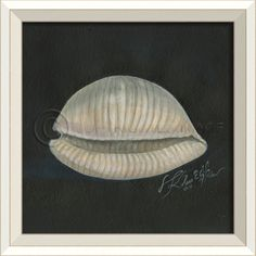 Seashell Number 2 (White Frame) - Sea Shells - Large Spicher and Company - Distinguished Imports #seashell #ocean #painting #kolenespicher