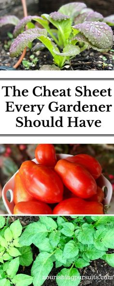 When I first started gardening, I tried to learn about each individual plant separately until I realized I could learn about the families to speed up the process (and get more produce quicker)! #garden #tomatoes